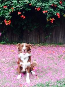 Procrastipuppy -- A.L. Tait's dog