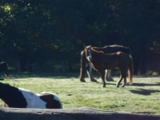 Horses. Photo by Jessie.