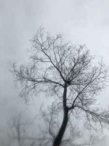 A tree in mist, photo from pexels.com