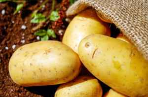 Potatoes dug up from the garden. Image courtesy of pexels.com