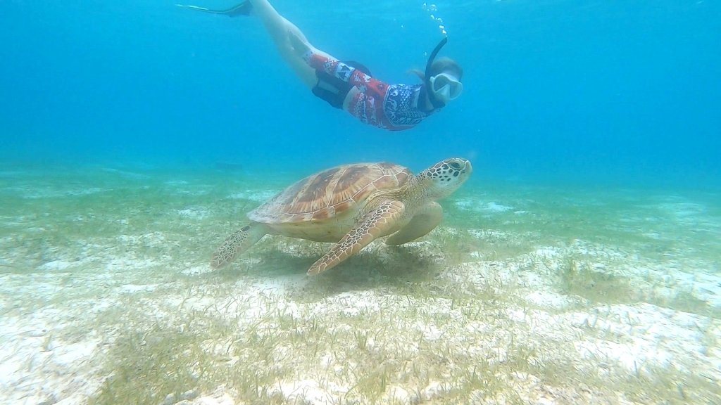 Kylie Howarth swimming with a turtle