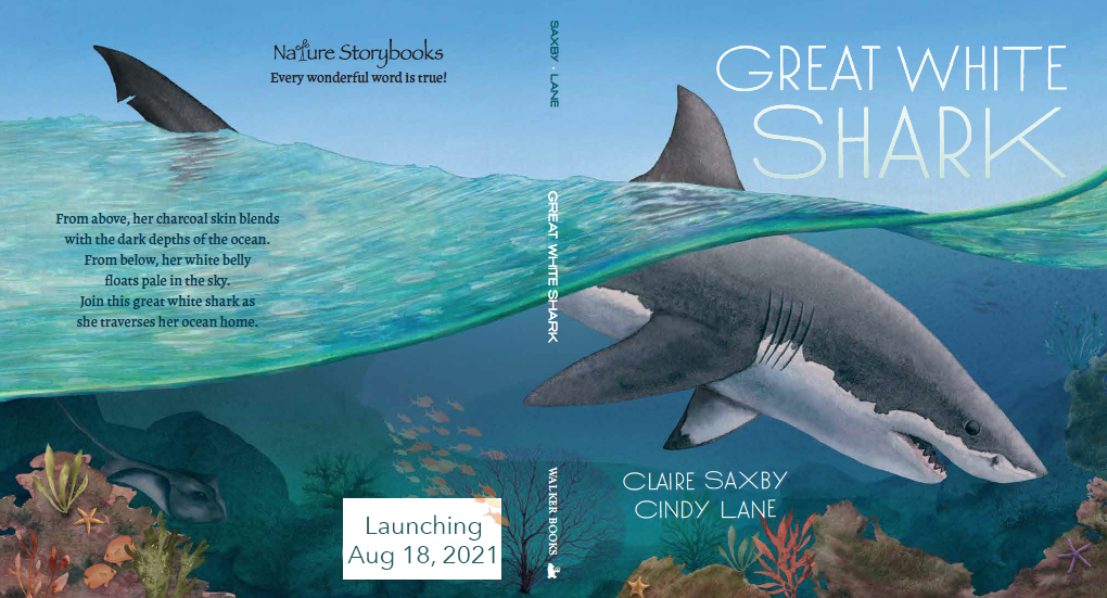 Back and front covers of Great White Shark by Claire Saxby and Cindy Lane
